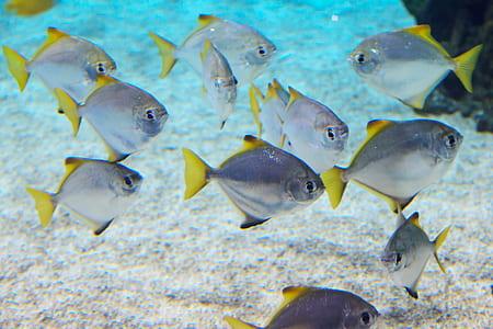 gray-and-yellow fish lot