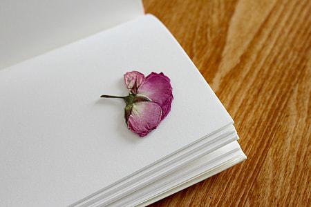 purple flower on white blank book
