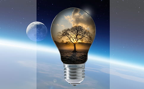 light bulb with silhouette of tree wallpaper