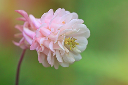 close up photography of white petaled flower blooming at daytime