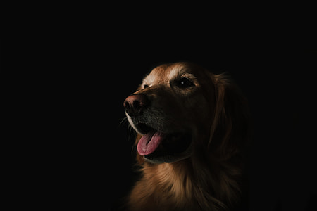brown dog in dark room