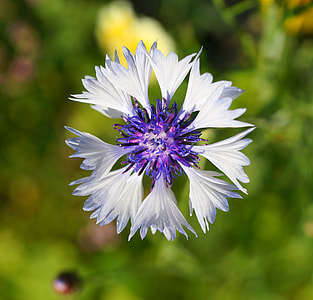 white and purple petaled flower photography