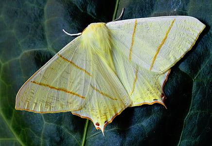 macro shot of yellow and orange moth