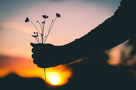 silhouette of person picking petaled flowers