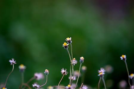 Yellow Petaled Flower Blooming during Daytime