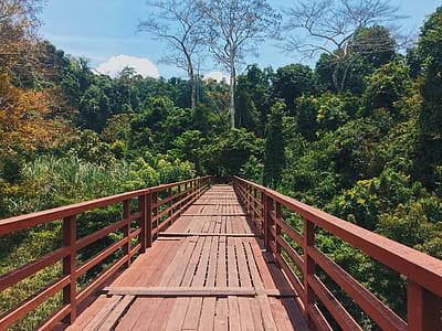 Red Bridge Through a Forest