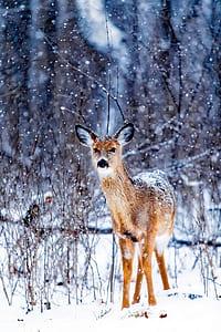 brown deer standing on snowy surface