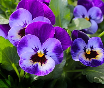 purple petaled flowers in close-up photography