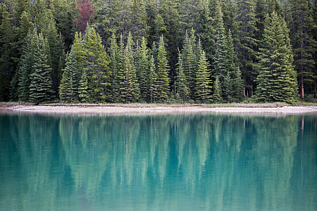 green pine trees near body of water at daytime