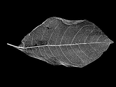 close up photography of green leaf