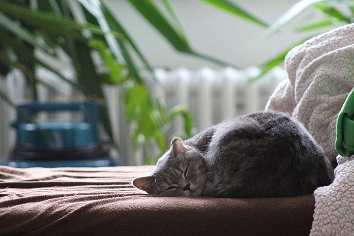 gray cat laying on brown mattress