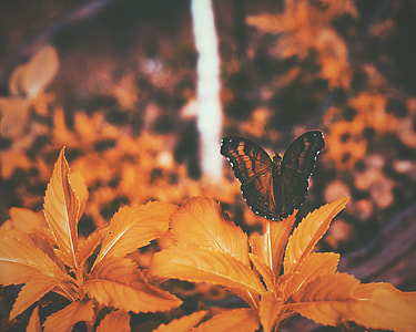 butterfly, leaf, orange, nature