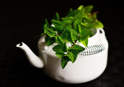 green leaves in white ceramic teapot