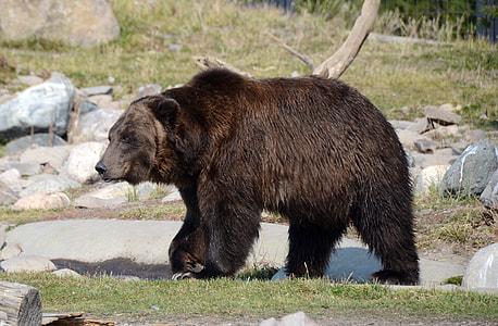 grizzly bear on rock formation during daytime