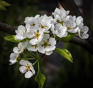 white tree blossom in close up photography