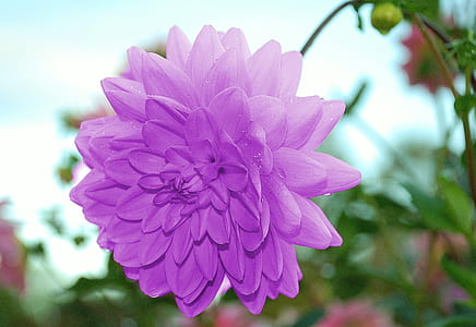 selective photo of purple flower