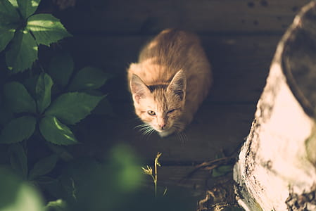 orange tabby cat surrounded by green leaves