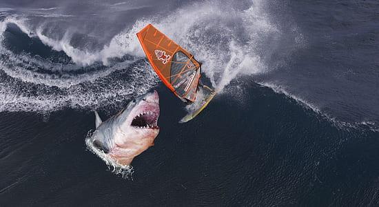 windsurfer attack by shark