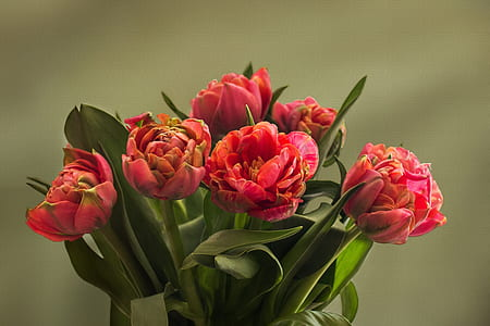 selective photo of pink-and-orange flowers