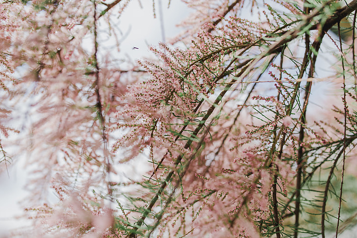 Tree bloom in early Spring