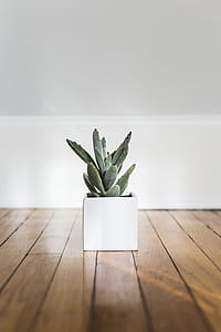 green succulent plant in white ceramic pot