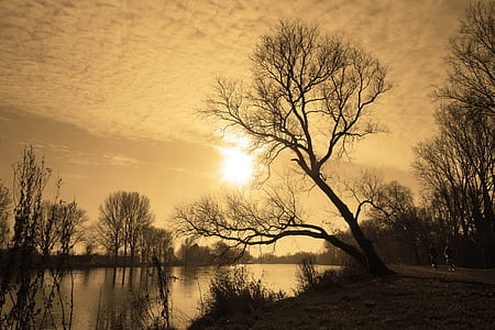 black tree near body of water under white sky