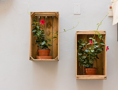 two potted petaled flowers on shelf