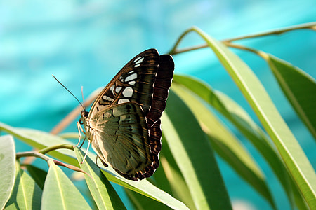 green and black butterfly perched on green leaf in closeup photography