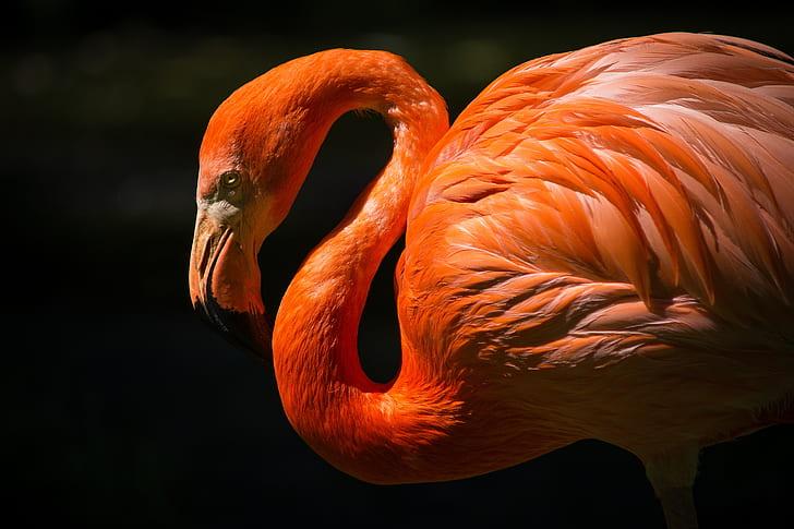 closeup photography of orange flamingo