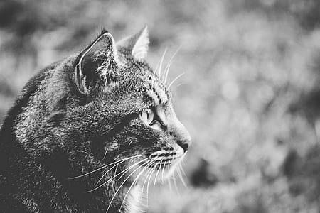 Greyscale Photo of Cat