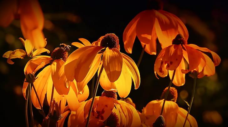 macro shot of orange flowers