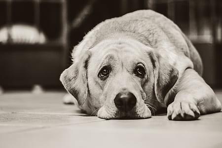 greyscale photo of dog lying on floor
