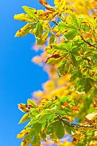 tilt shift photo of green leaf plant