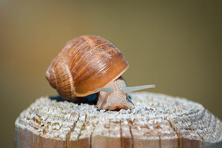 selective focus photography of snail on brown wooden post