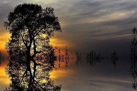 reflective photography of silhouette of tree