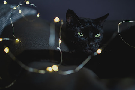 Black cat and fairy lights
