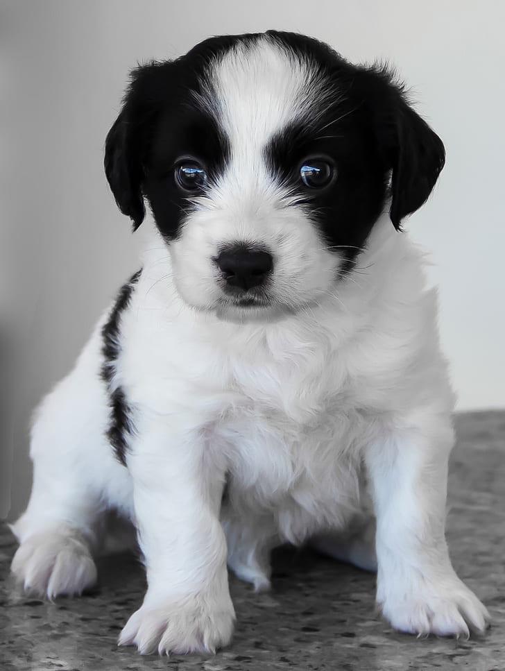medium-coated white and black puppy