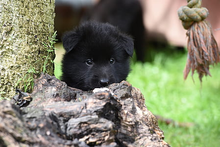 long-coated black puppy hiding on brown wood close-up photo during daytime