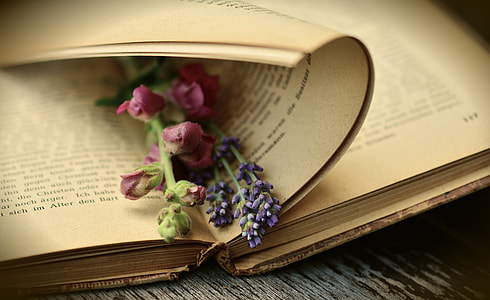 red petal flower on brown book page