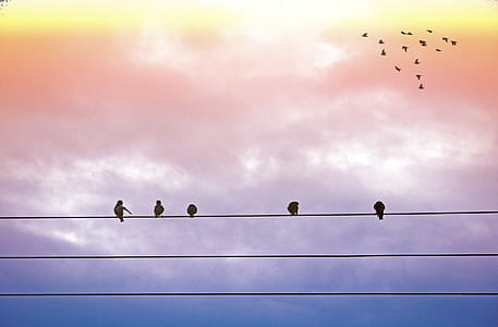 five birds on electric wires