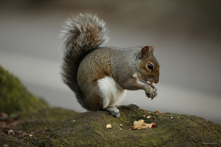 selective focus photograph of eating squirrel