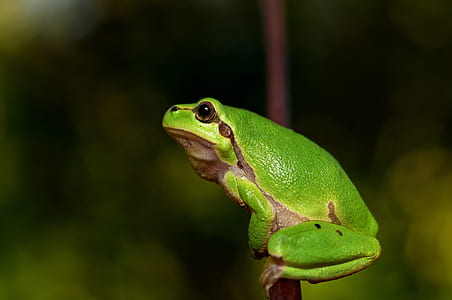 selective focus photography of green and brown frog