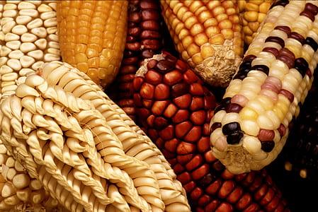 bunch of corn cub