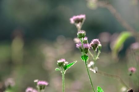 Macro Photo of Pink Flowers