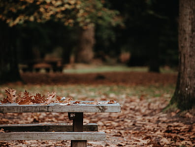 dried leaves on gray wooden bench