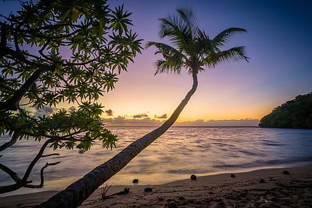coconut palm tree on beach shoreline golden hour photography
