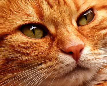 closeup photo of orange tabby kitten face