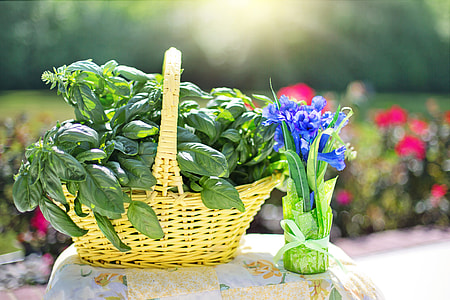 green leafed plant on brown wicker basket