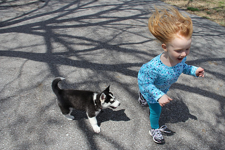 girl running beside black and white Siberian husky puppy on road during daytime
