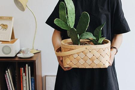 green socculent plant